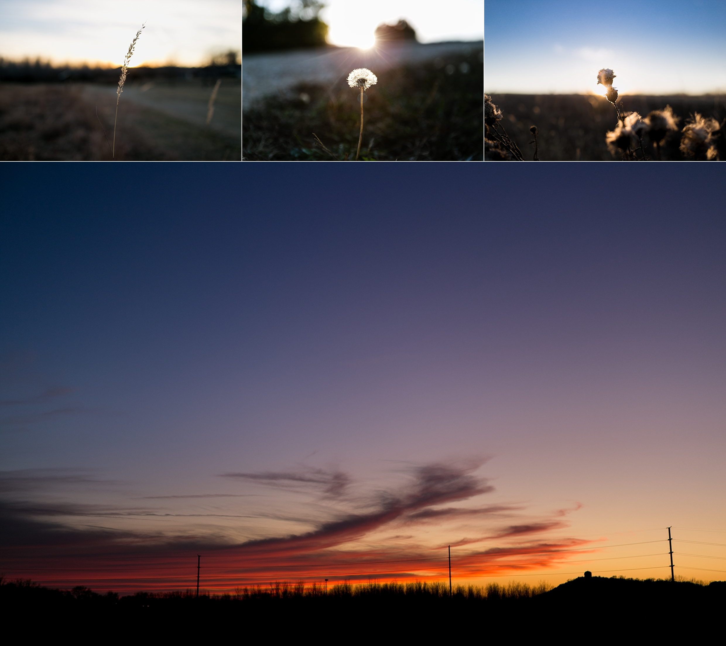 Images of wildflowers at sunset in Warner Park in Manhattan, Kansas.