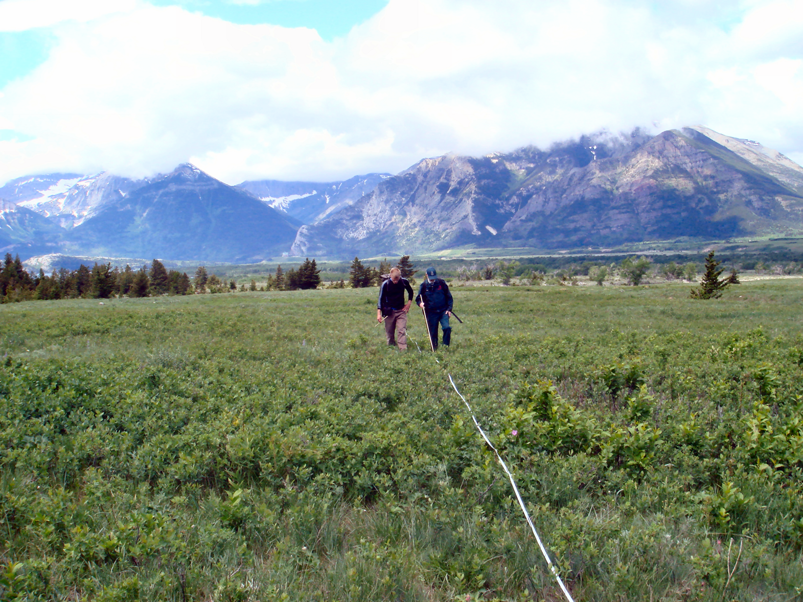 Rob Watt and Mark Thorkelson Doing Track Transect Work, Photo by Cristina Eisenberg