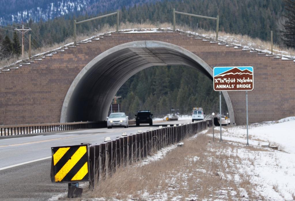 Animals' Bridge Wildlife Overpass, Flathead Reservation, Montana, Photo by Cristina Eisenberg