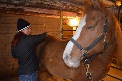 Horse 3.jpg