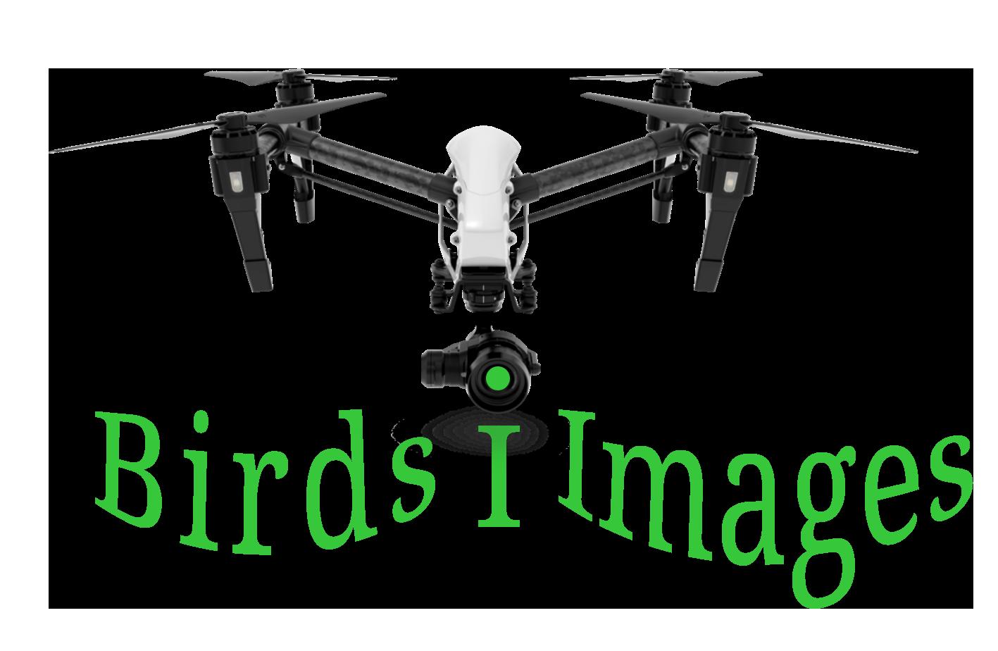 birds-i-images.png