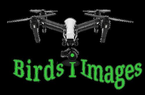 Birds I Images Logo