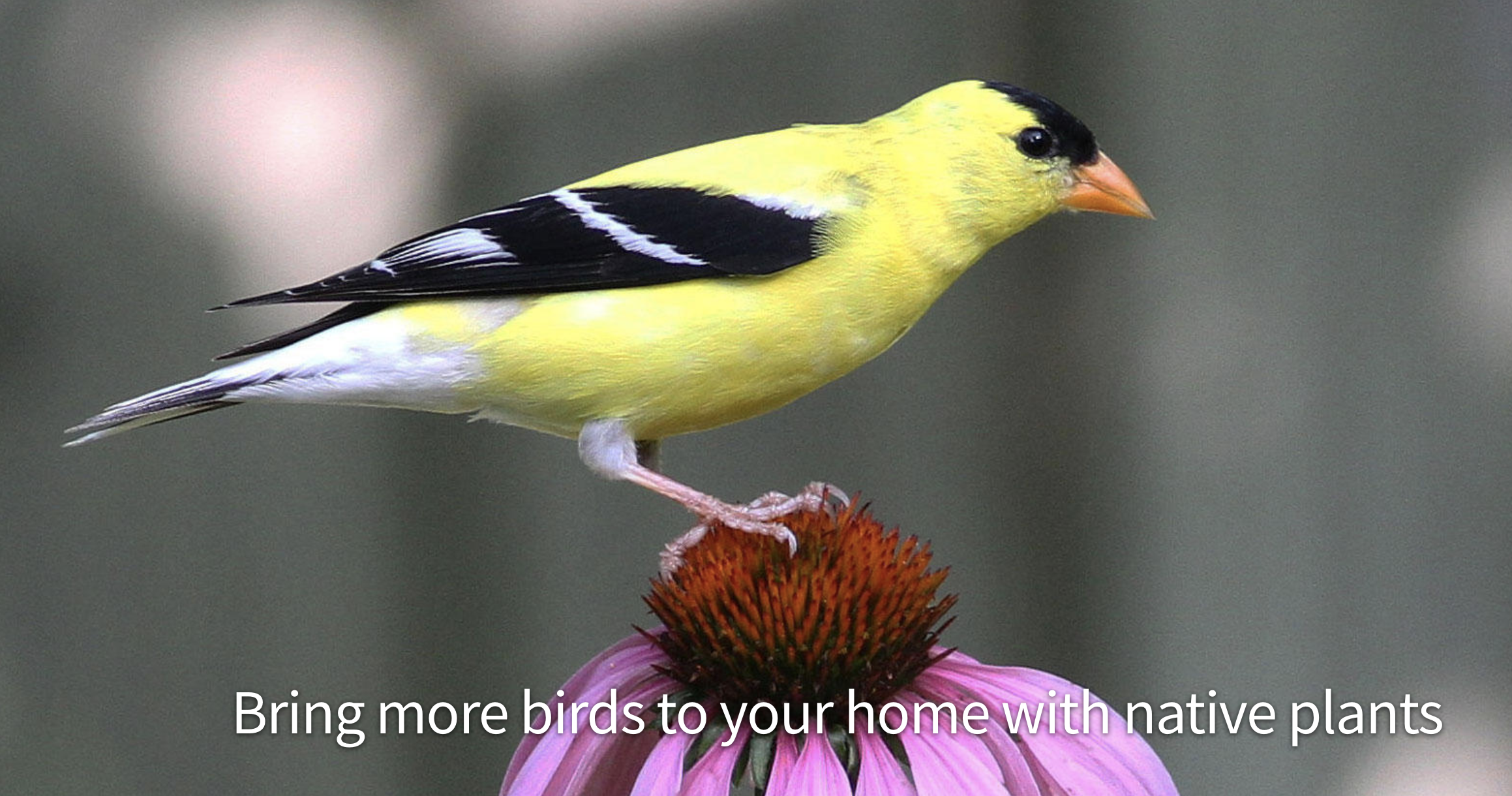 Audubon Native Plants Database - Click here and enter your 5-digit zip code to use Audubon's native plants database and explore the best plants for birds in your area.