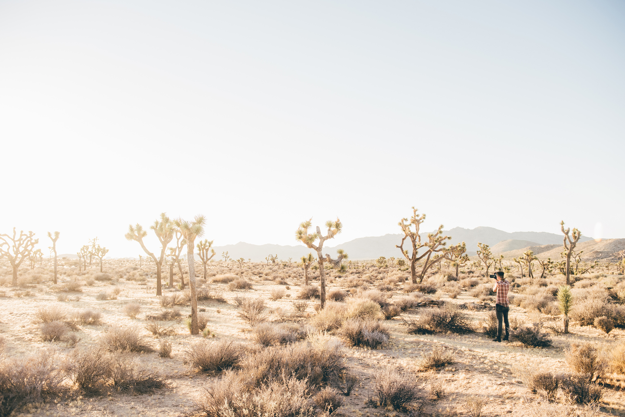 full_clif-joshuatree-desert-shooting-1.jpg