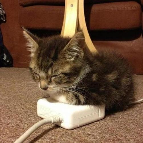 All electronics produce heat. Just ask Mr. Kitten.