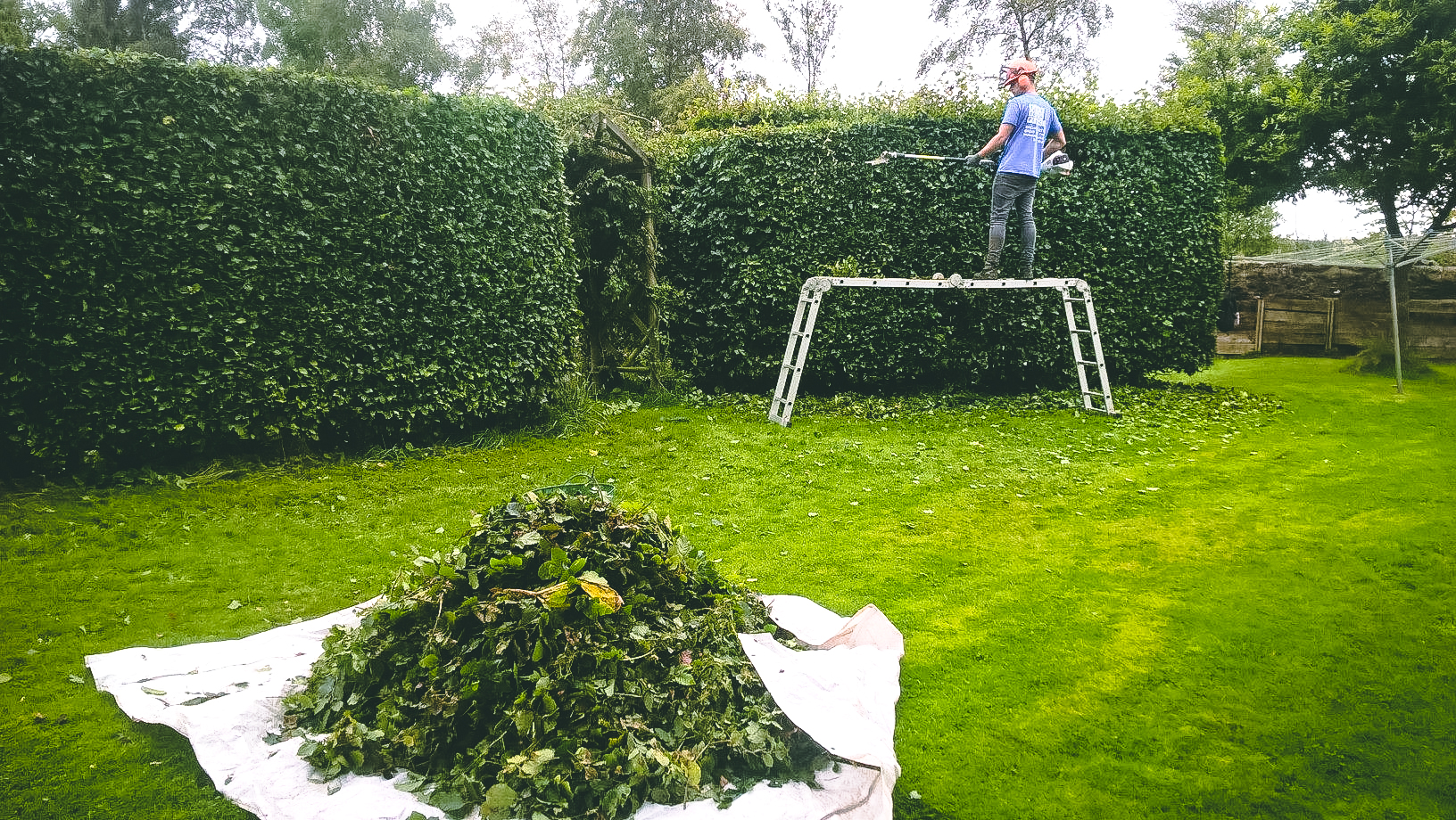 Aberdeen Pruning & Hedge Trimming