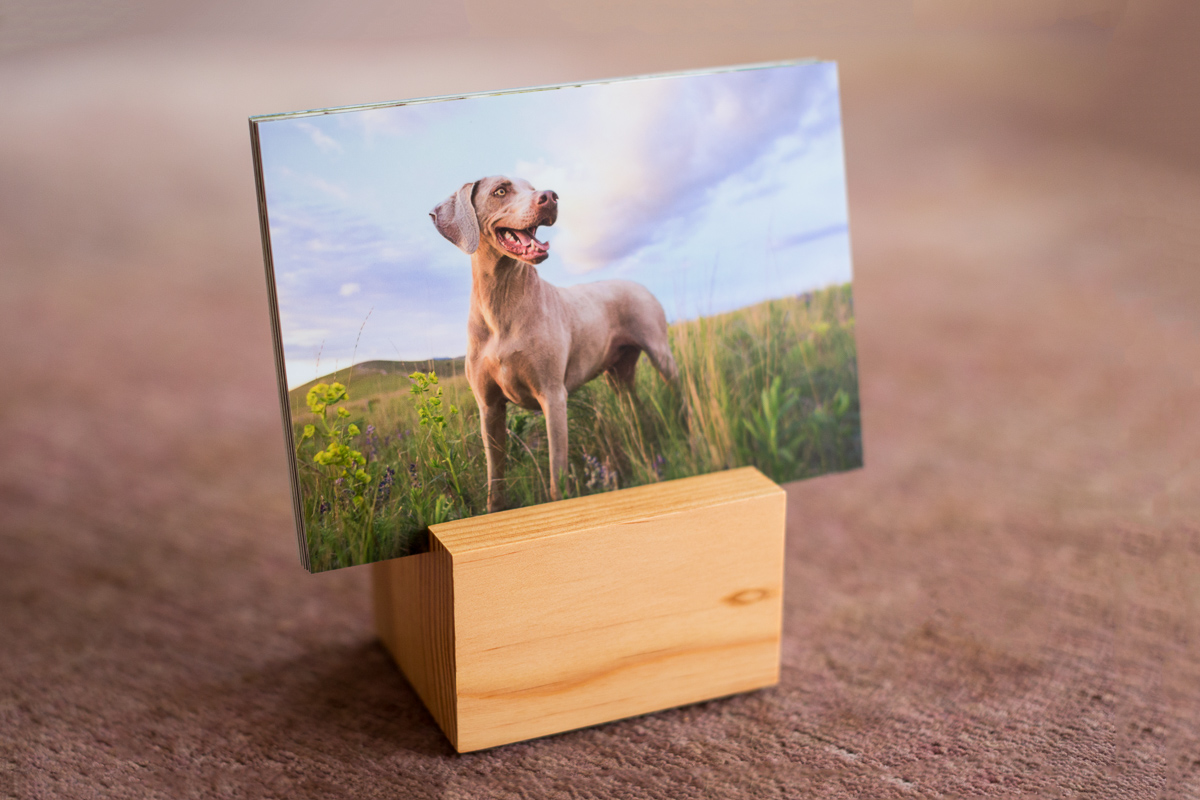 A wooden display block holds a series of printed images. The visible photo in front is of a Weimaraner on Waterworks Hill in Missoula, Montana.