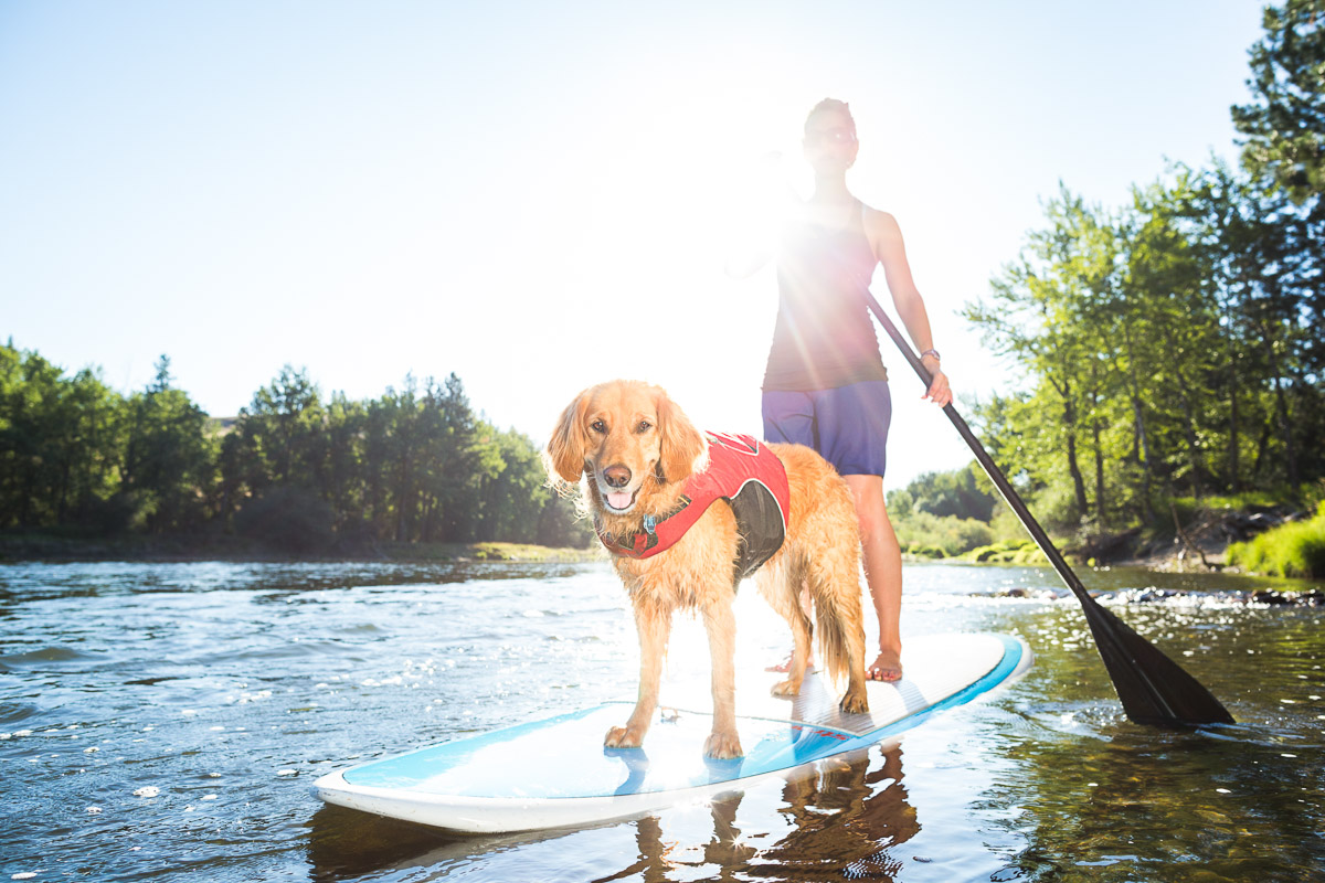 A Golden retriever wears a red Ruffwear life jacket while paddleboarding with his mom on the Bitterroot River.
