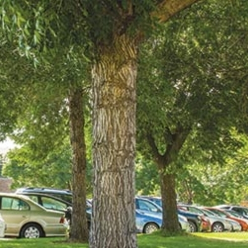 Free parking at the St. Timothy Festival on the baseball field just east of the church grounds and on the surrounding streets.