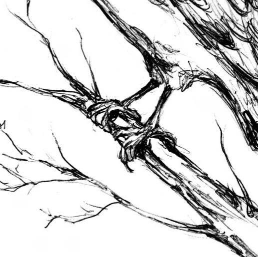 canarys-logo-talons-hand-drawn-art.jpg