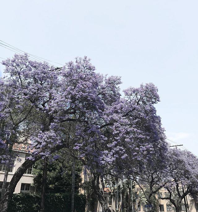 Colors from nature that inspire my paintings 💟  #art#nature#lavendercolor#beautyaroundus#artinspirations#losangelesartists#artworldly#natureartwork#искусствовечно#цвет#природа#киеварт
