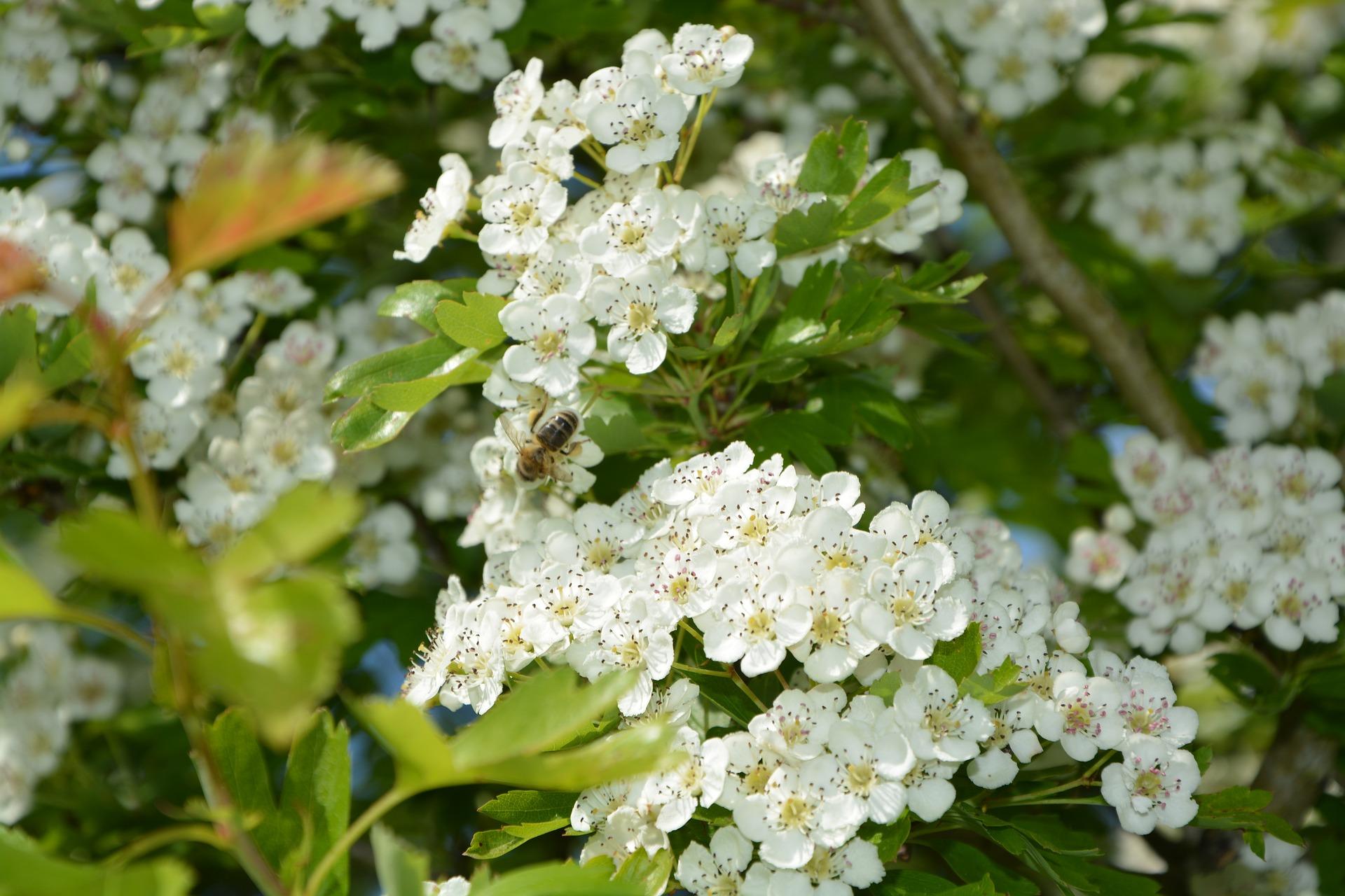flowers-2855725_1920 (1).jpg