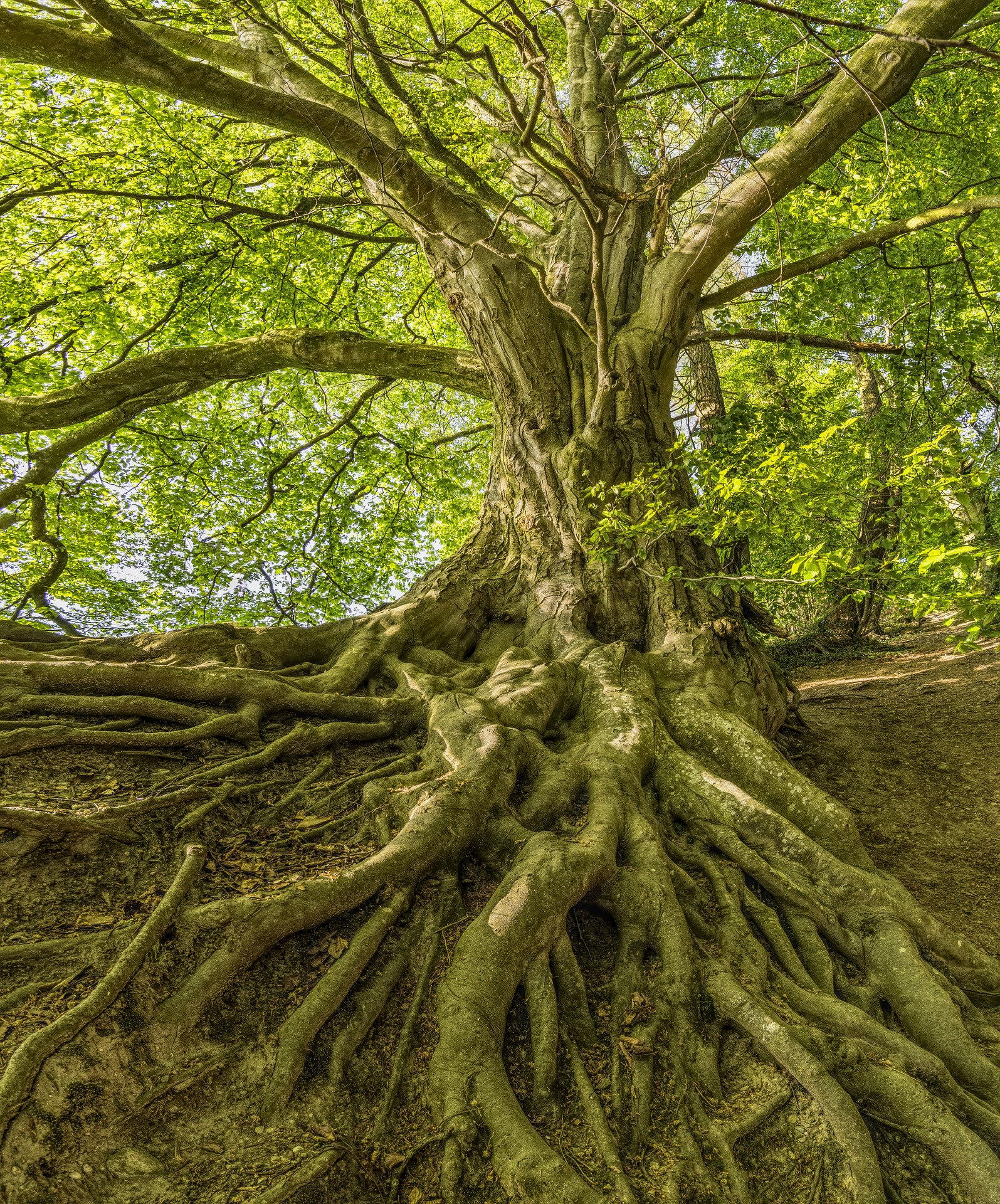 tree-3385957_1920.jpg
