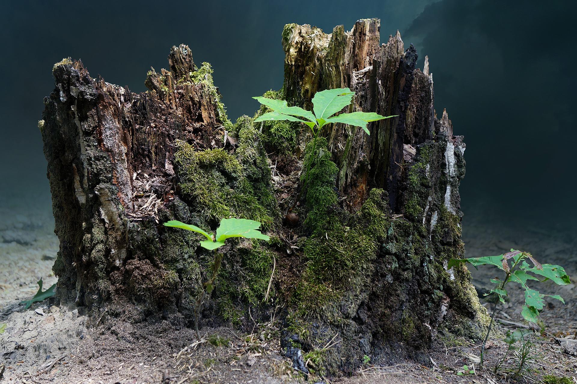 tree-stump-2267010_1920.jpg