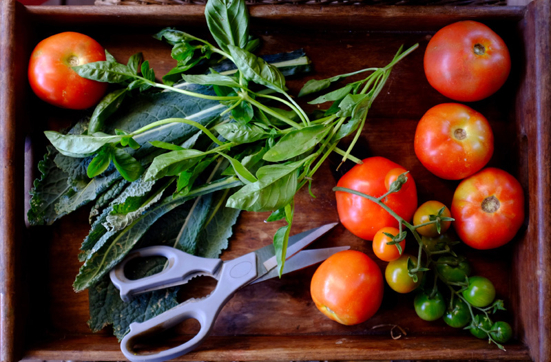 nutrition, nourish, nourish in nature, organic, garden, yoga retreats, well being retreats, interated health retreats, portugal retreats, retreat portugal, organic health, wholefoods, herbs, kitchen medicine