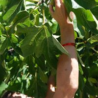 Picking Fruit Yoga Retreat