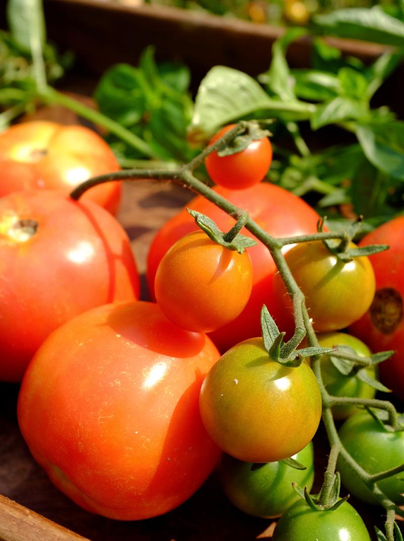 food, tomatos. childrens food, food for kids, yoga retreat, vegetarian food, vegetarian lasagna, vegetarian pizza,