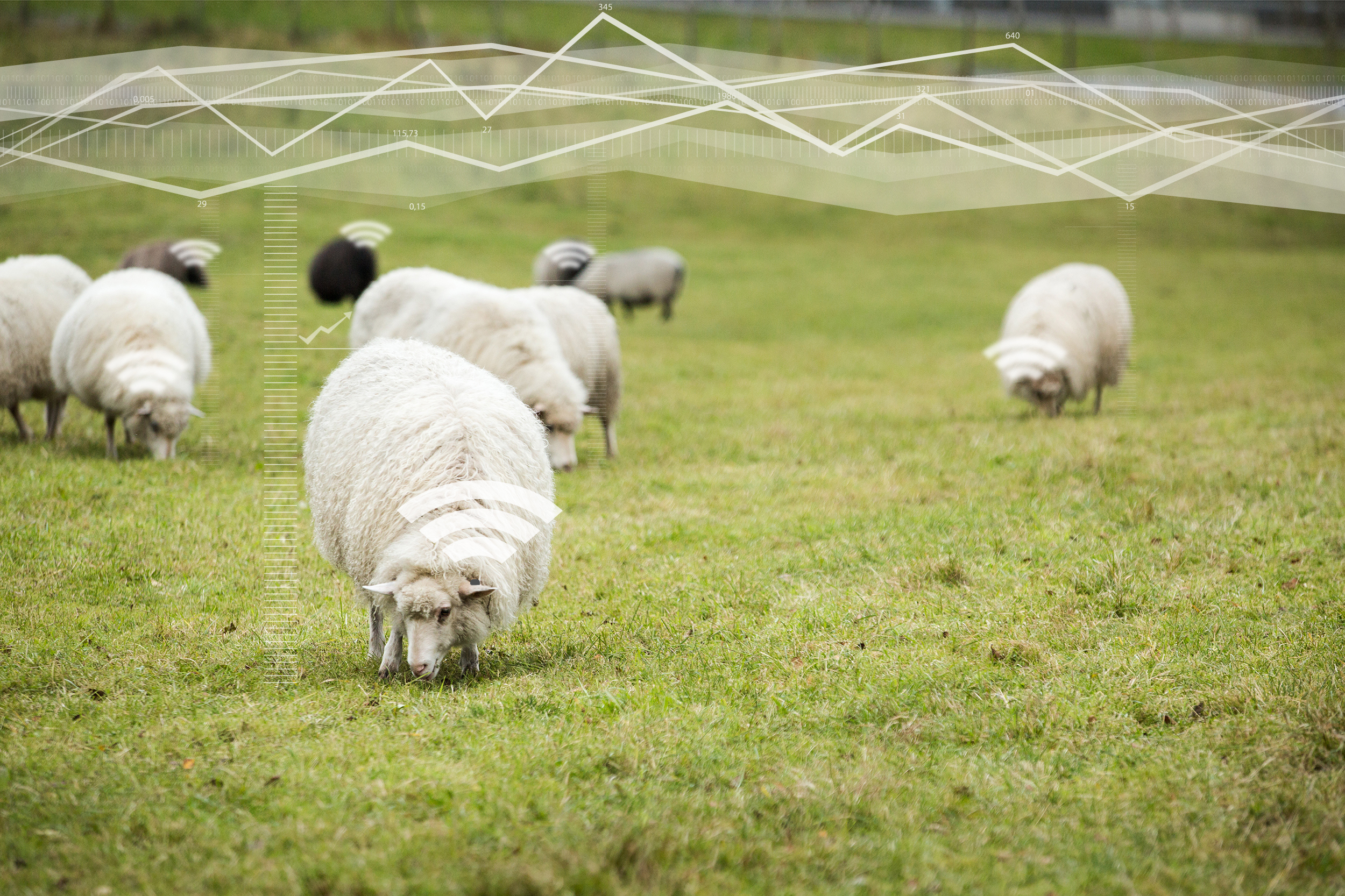 Analytics - Capture big data sets on your flock's grazing, drinking and behavioral activities. This enhances decision making for future breeding, grazing and managerial planning.
