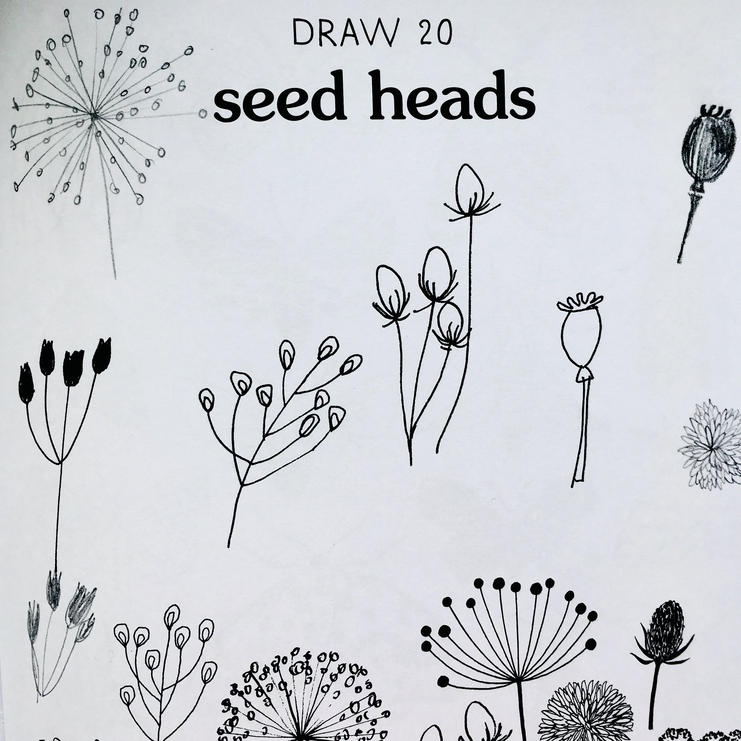 Drawing seed heads in '20 ways to draw a tree…'