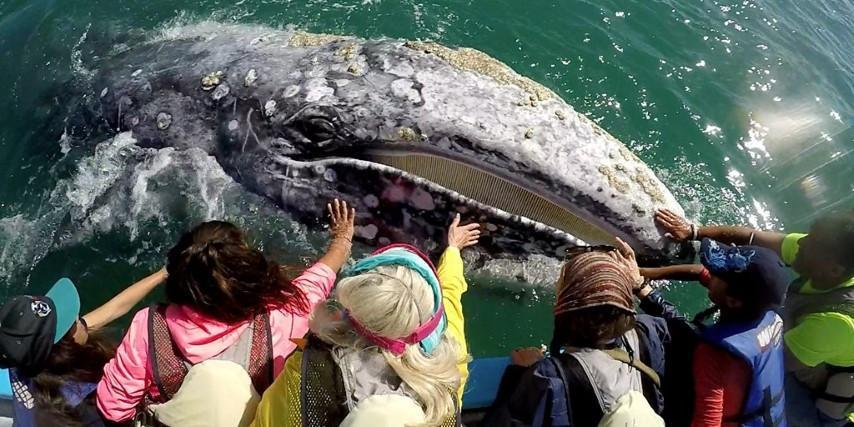 WhaleBreathing_classes.jpg