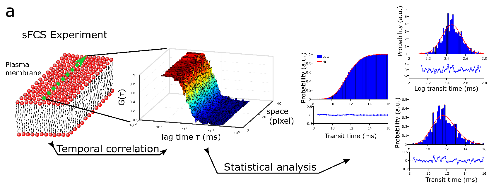 Schematic of the experiment principle. (Left) sFCS data are recorded by scanning the laser (green dots) along a micrometer line in the membrane (lipids with red headgroups and gray tails), thereby creating (through temporal correlations) FCS data (decaying curves G(τ) from red to blue against correlation time τ) for each pixel along the line (space). (Right) All FCS data are fitted to obtain values of transit times through the observation spot, in which histograms (blue, probability distributions; right, cumulative; top right, logarithmic values; bottom right, linear representation) are fitted by the LogNorm (red line), with weighted residuals in the respective bottom panels.
