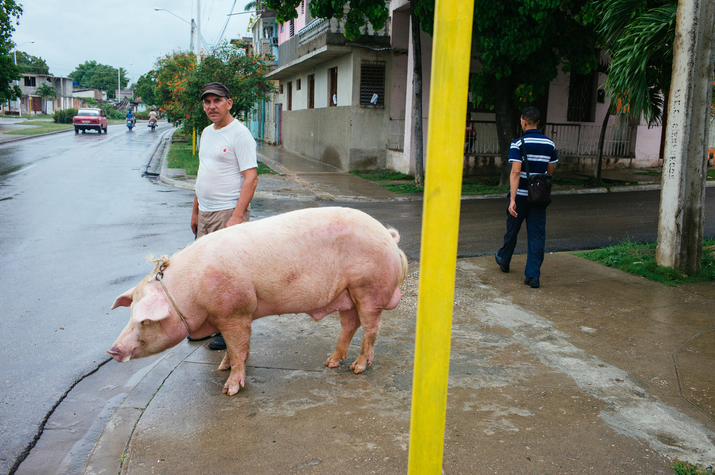 Guantanamo-2016-man-walking-with-a-big-pig-street-photography-by-Alessandro-Avenali.jpg