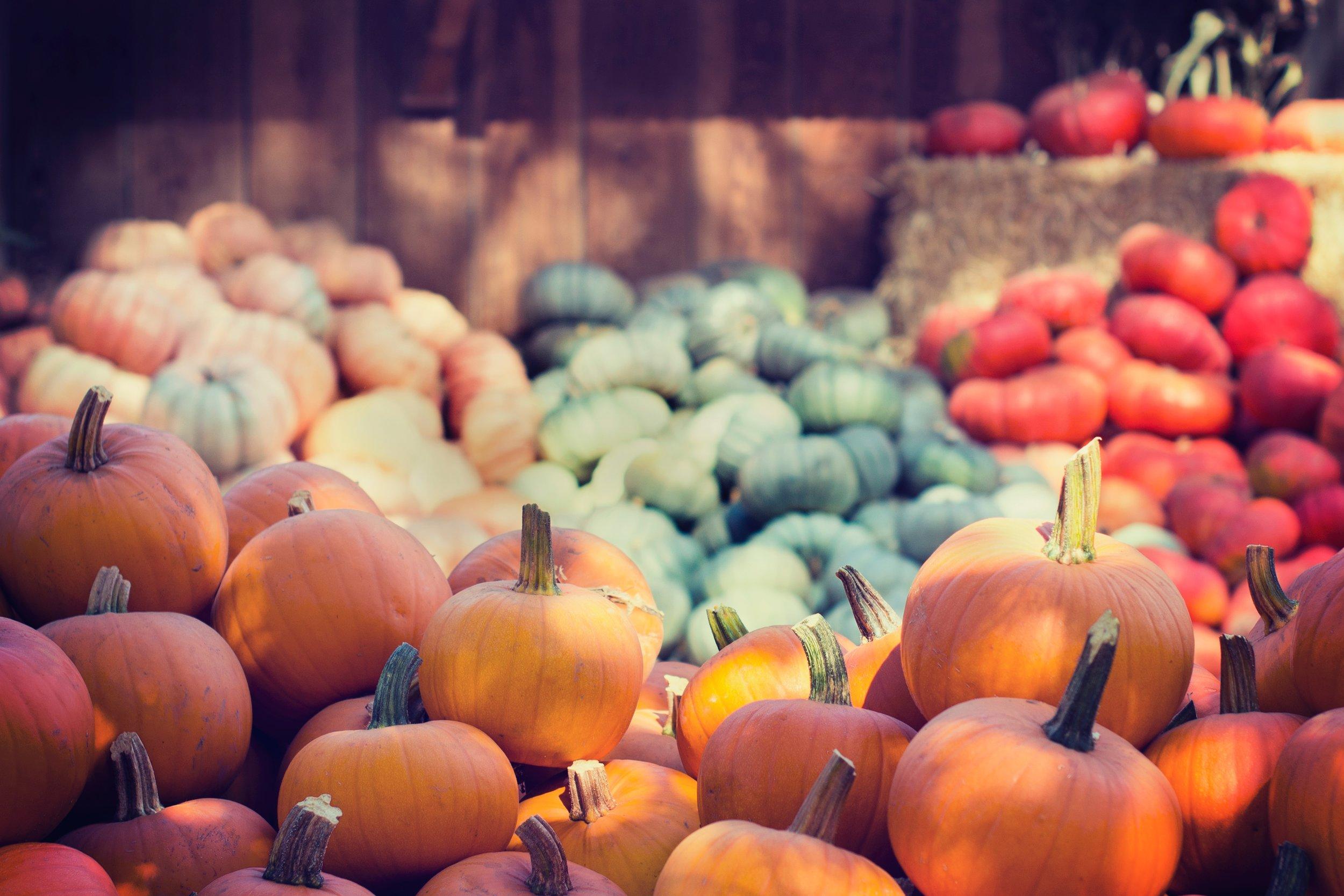 abundance-agriculture-close-up-383605.jpg