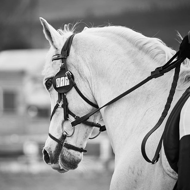#dressagedaughter @british_dressage Red rosettes for the team today 😍 #equestrian #photography @sonyalpha @captureonepro #horses_of_instagram #equinephotographer #blackandwhitephoto #blackandwhitephotography