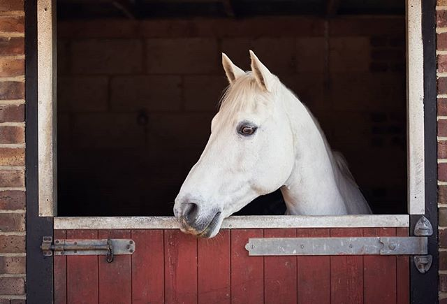 Orion in colour (well, the stable bit...) @amyamyboaler @tallulah.m.dressage @nckymrl #equinephotographer