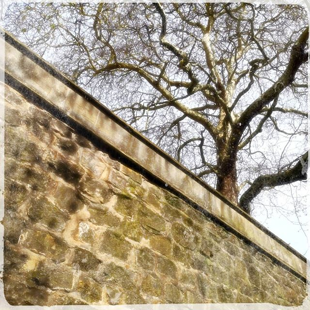 Oxford tree (and wall!) #city #photography #pixlr #p20pro #huawei #urban #cameraphone
