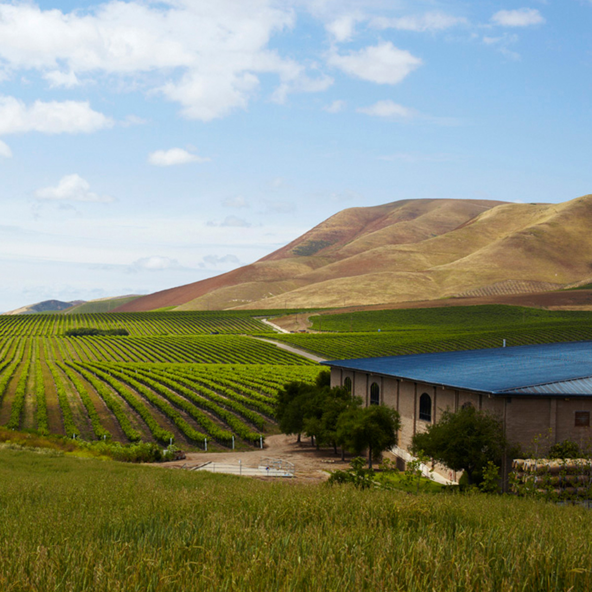 Cambria Winery & Vineyards -