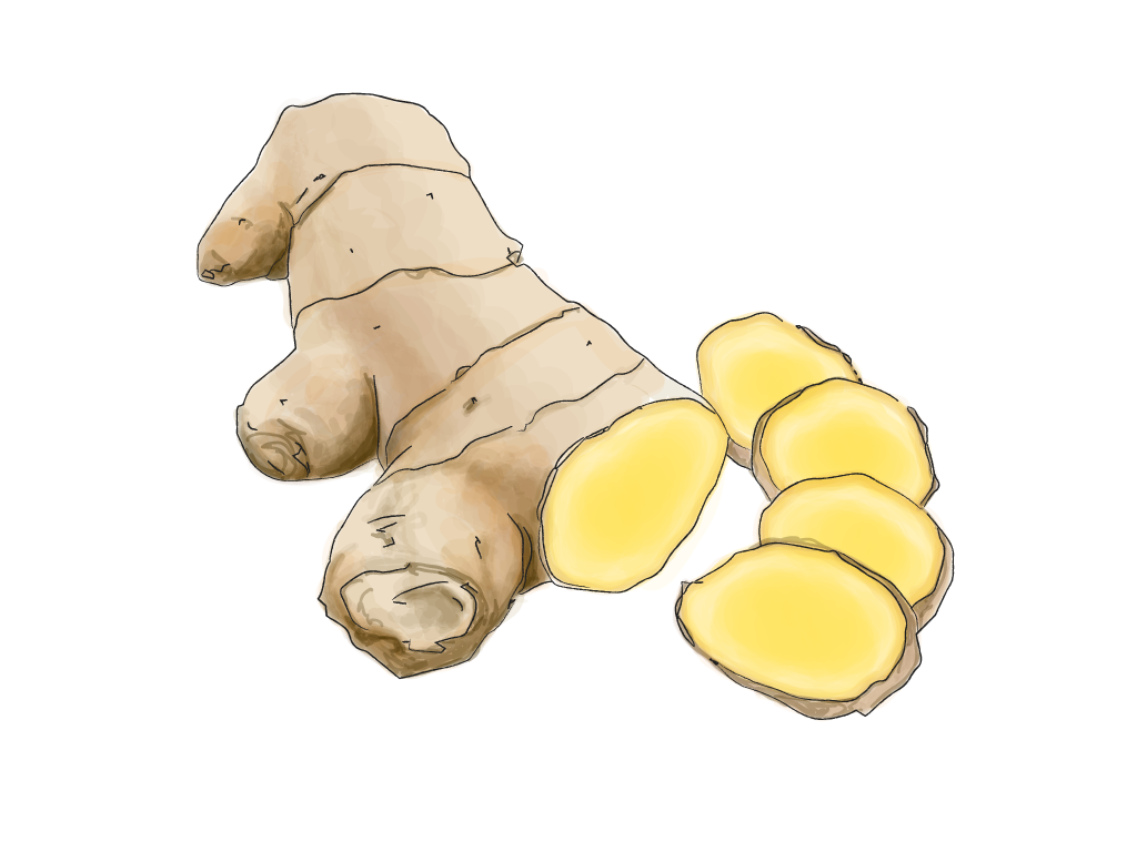 ginger in progress-01.png