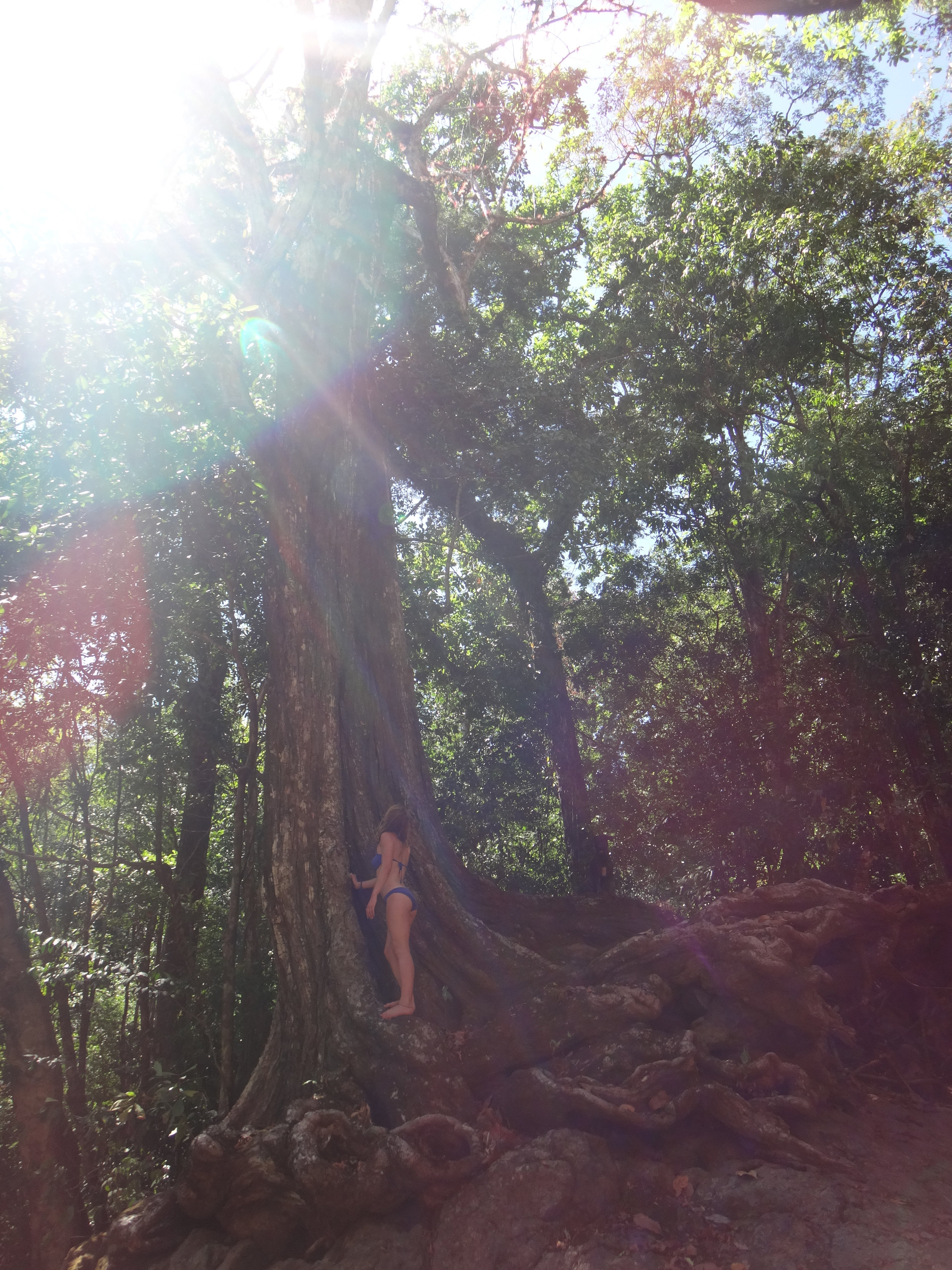 big tree with light.jpg