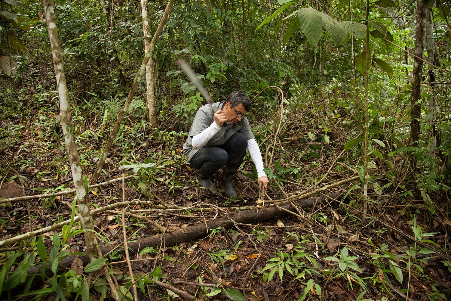 TZ'IJK.0.   Collecting angarilla wood in the rainforest to build the geodesia structure.