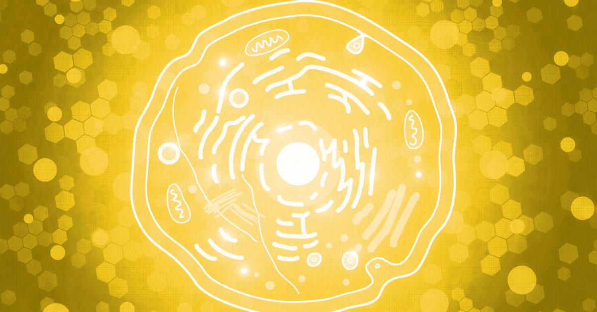 mitochonria_fb_1200x628.jpg