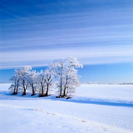 Mikael Larsson, Träd vid vinterå