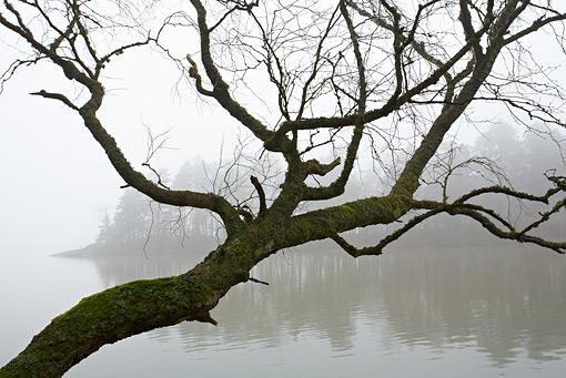 ©Torbjörn Hesselbring, Morgondimma