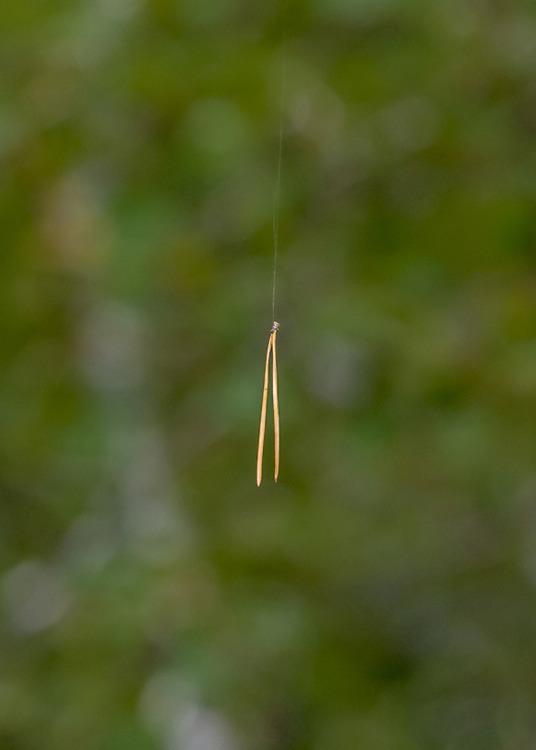 © Mats Larsson Kindeland, Hänger på en skör tråd
