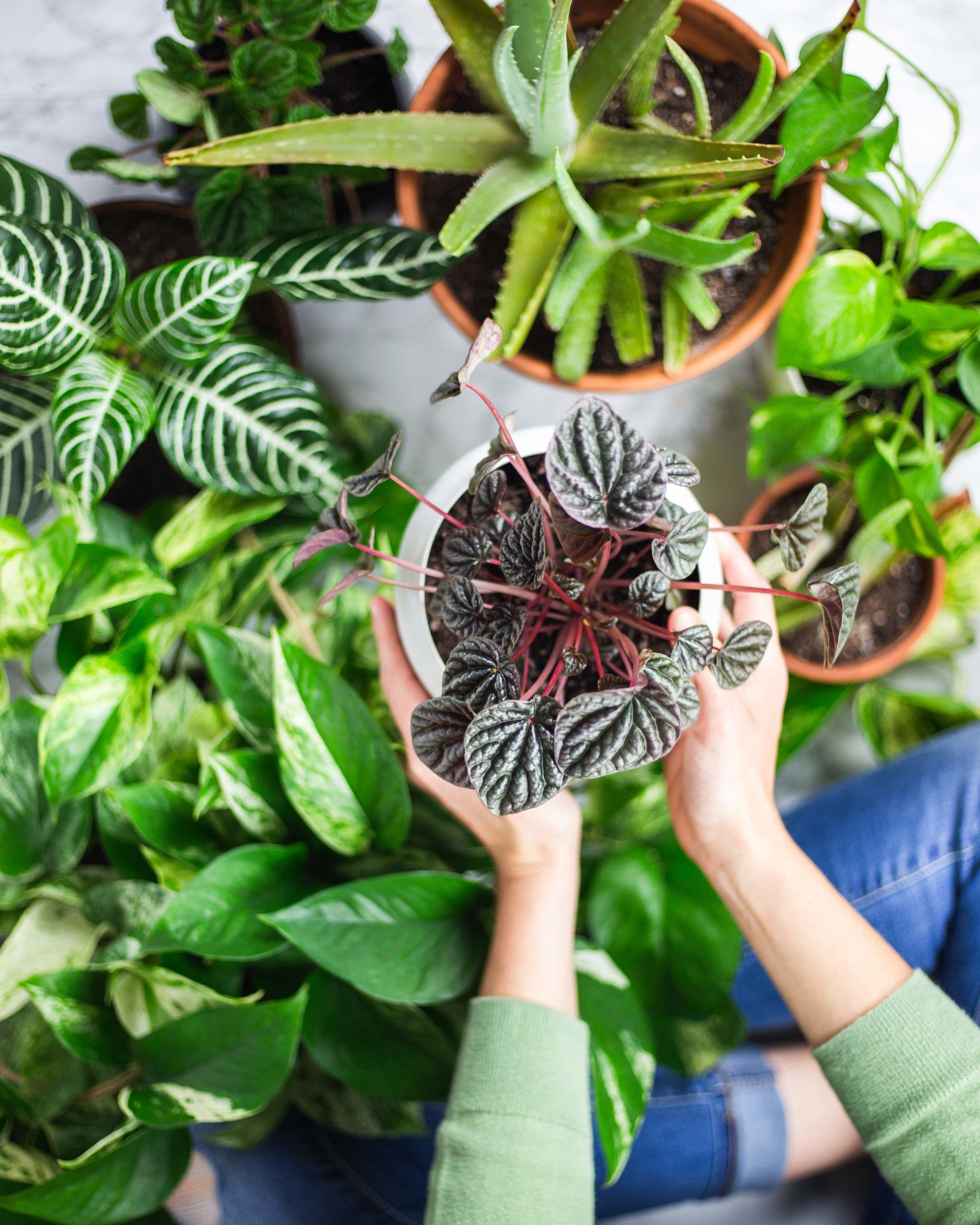 Houseplants for Better Health | Health Benefits of Houseplants + 5 Houseplants to Purify Air