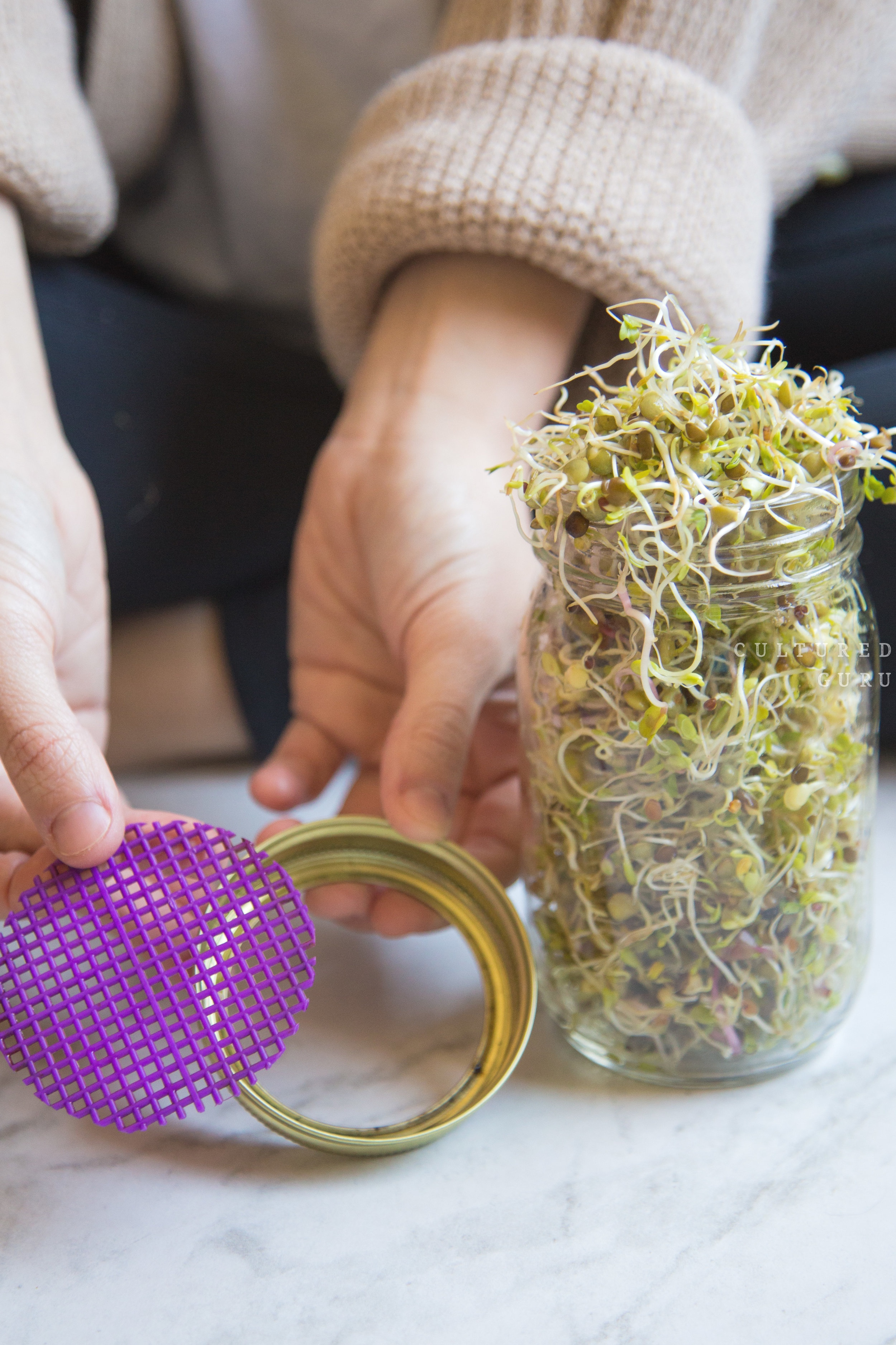 Recycle+Our+Jars+%7C+How+to+Grow+Microgreens+%26+Bean+Sprouts+in+a+Jar