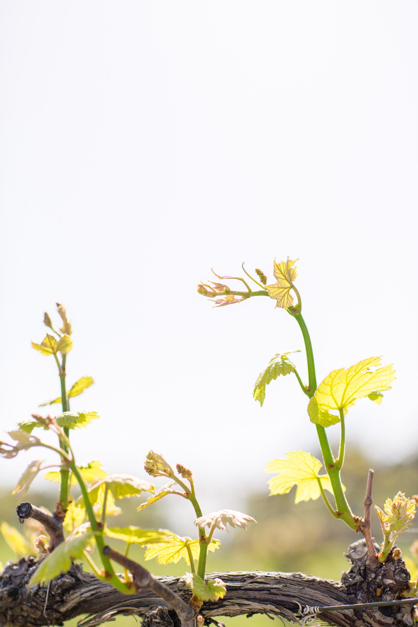 Olive Branch Styled Shoot-0009.jpg