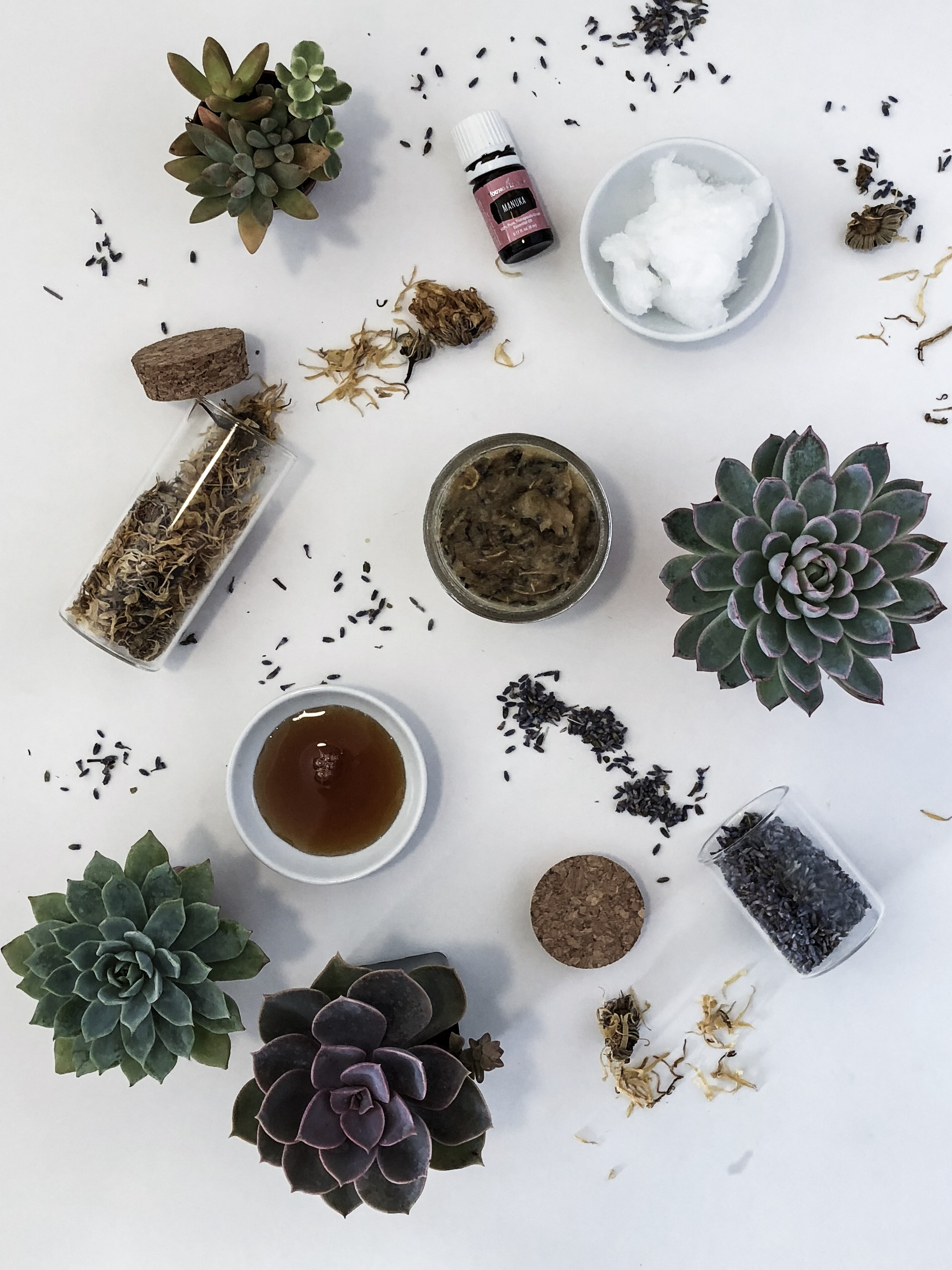 Manuka, Honey, Lavender, Calendula - Coconut Face Mask
