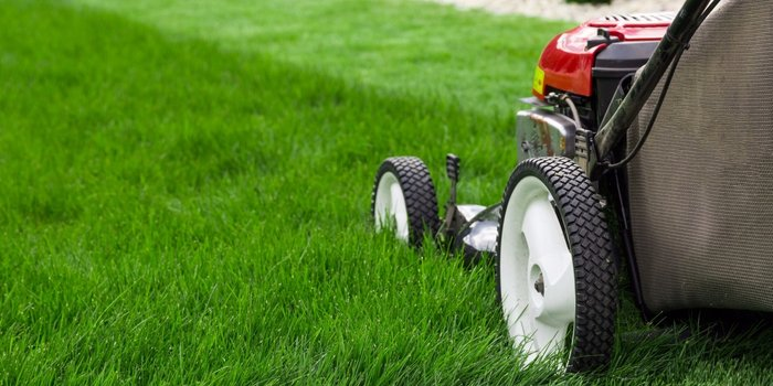 20160111170219-lawn-grass-cut-mow.jpeg