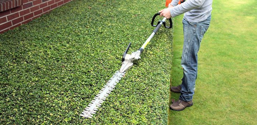 tree trimming services pruning hedges