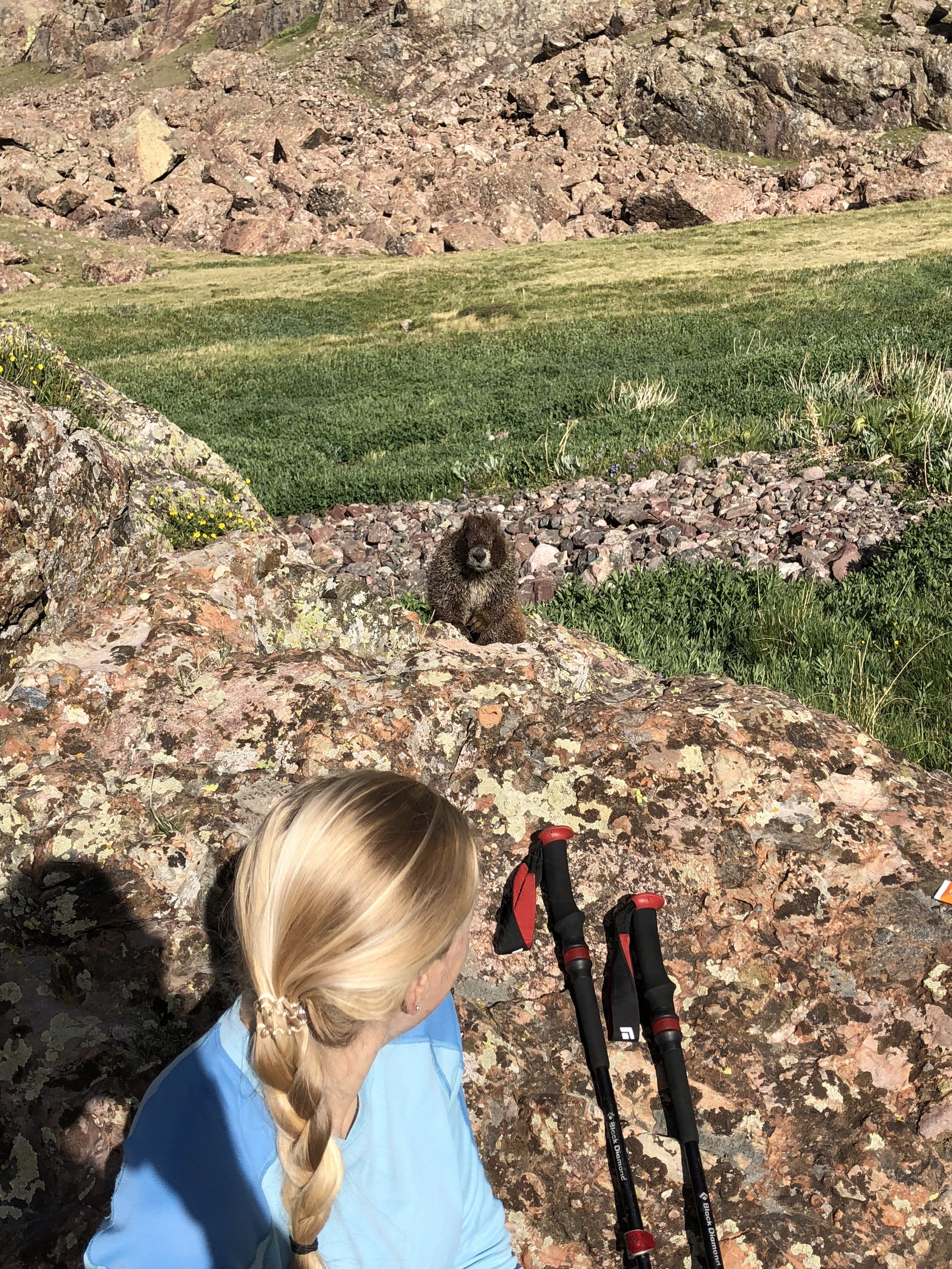 The marmots by Cottonwood lake are EXTRA friendly