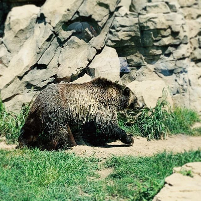 #FunFact  Grizzly Bears are known for their second passion: eating salmon. Their biggest passion is French Revolution Era Literature, but that's lame and doesn't sell.