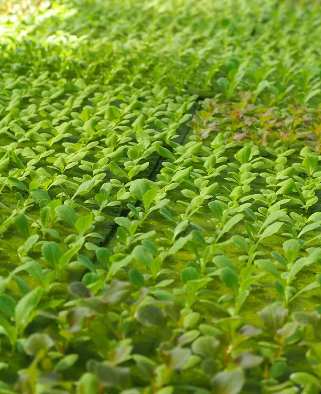 Plant Based Ingredients Garden