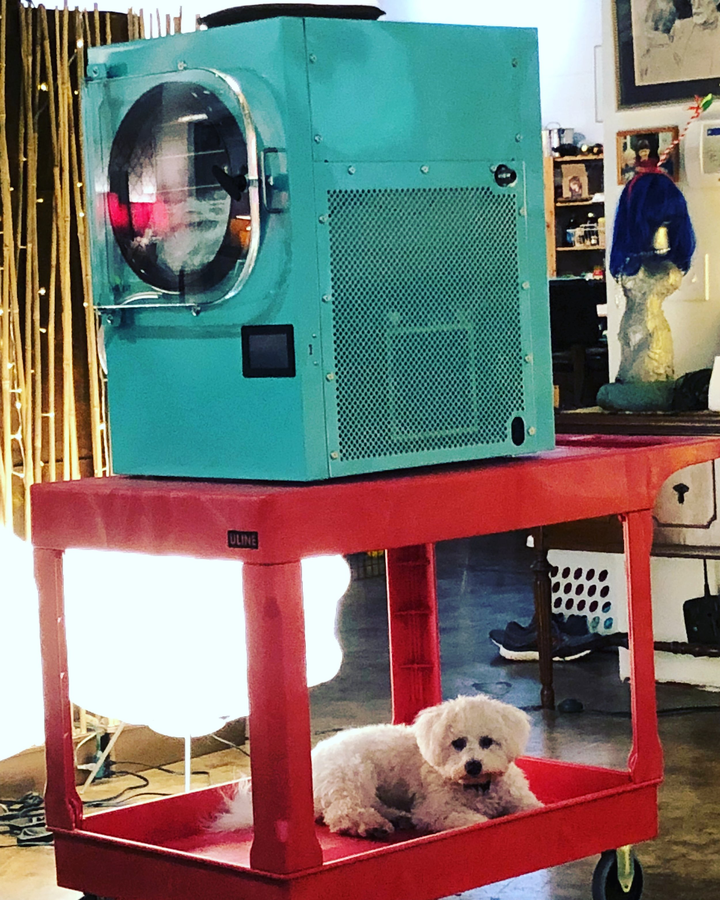 SteveBaxter, commandeering the freeze-dryer cart.