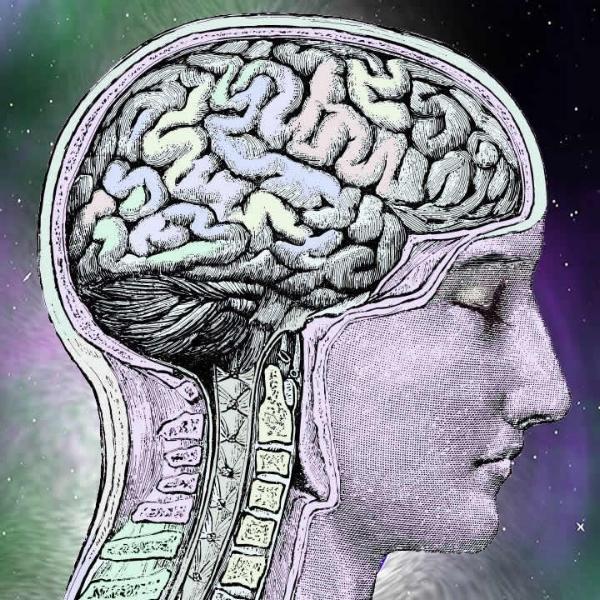 Hypnosis Brain austin tarot reader sm.jpg