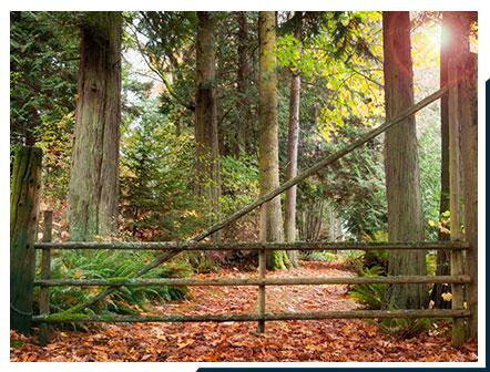 Wooden Trail on Lummi Island   Lummi Island Lodging